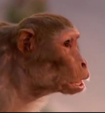 передача обезьяны-воришки смотреть онлайн